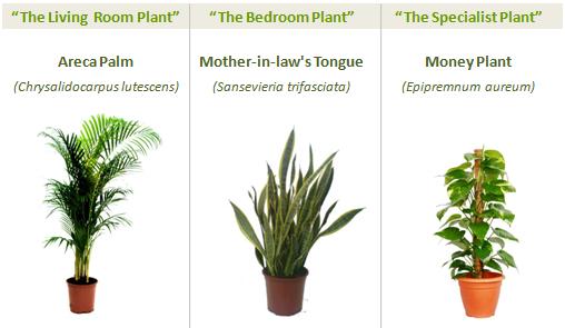 green_plants3